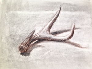 The white charcoal is used to emphasize the highlights on the antlers.