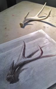 Deer antlers with drawing.